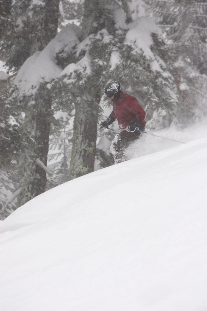Demetri Tree Skiing 2: Electric Boogaloo