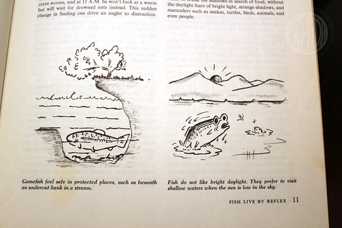 illustrated fishing guide