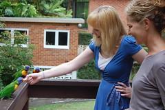 Pleasure for both (bobmendo) Tags: summer feeding chloe feedingthebirds mendelsohn 2011 lorrikeet eatingoutofmyhand