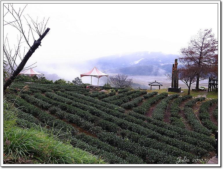 玉蘭茶園 (5)