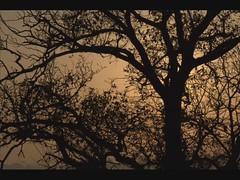 warm fog (carlocava) Tags: sunset italy tree video nikon italia tramonto colore country natura hills campagna slideshow nebbia albero marche senigallia colline bosco d5000 nikond5000