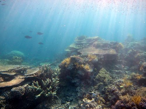 widok podczas porannego snorklowania