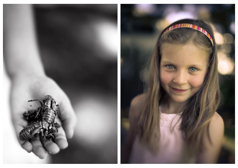 cicadashells