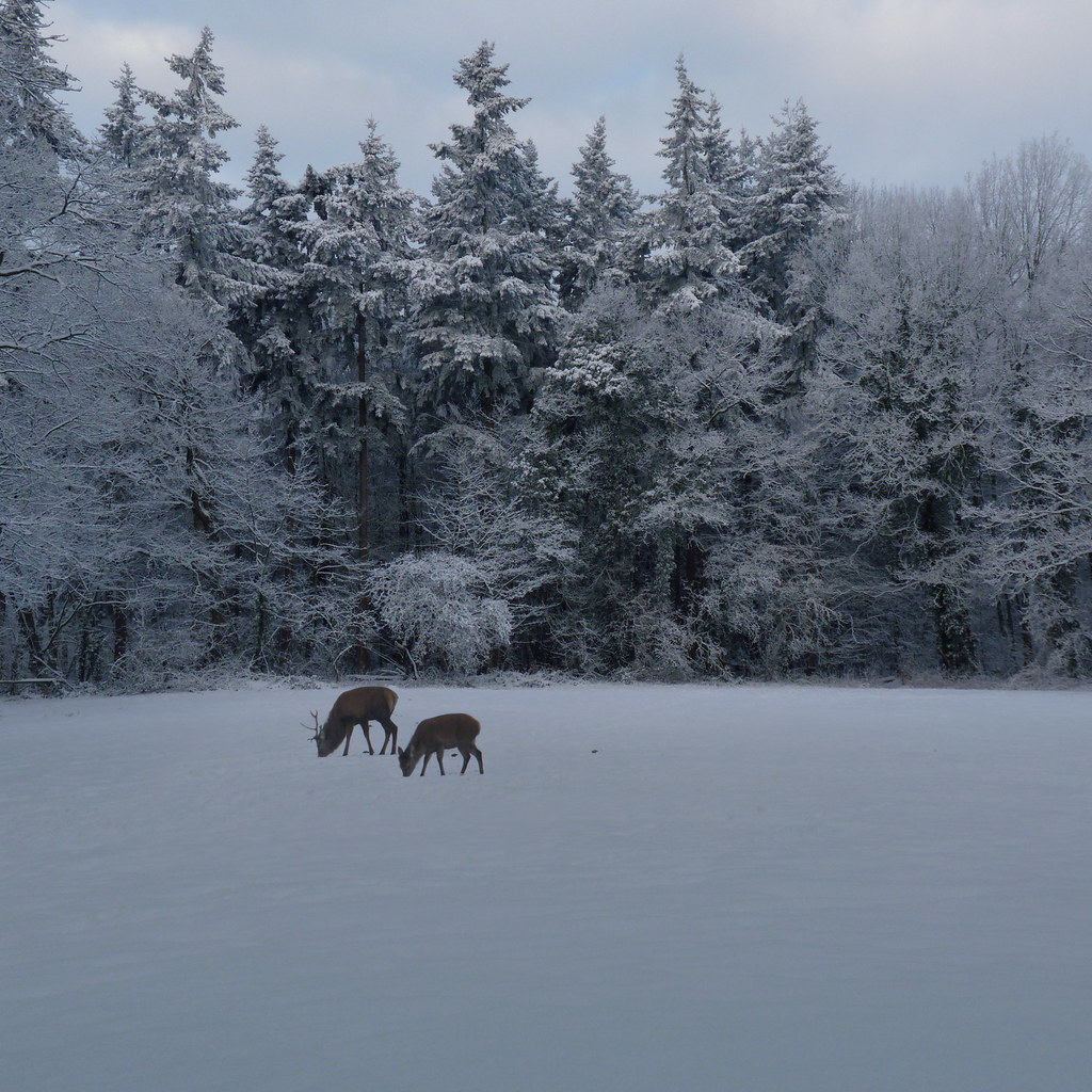 Holland's Hidden Treasure - The Hoge Veluwe National Park