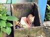 Pussy cat (Mangiwau) Tags: festival cat indonesia java blood garbage pussy eid goat bin goats jakarta gore cutting lamb lambs throat kambing bogor slaughterhouse sacrifice slaughtering adha sacrificial potong sampah idul dipotong