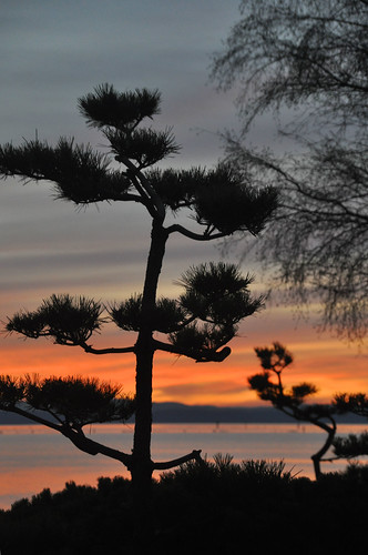 TRR: Garry Point Sunset Tree 2