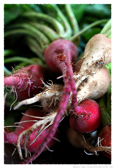 coloured beetroots© by Haalo