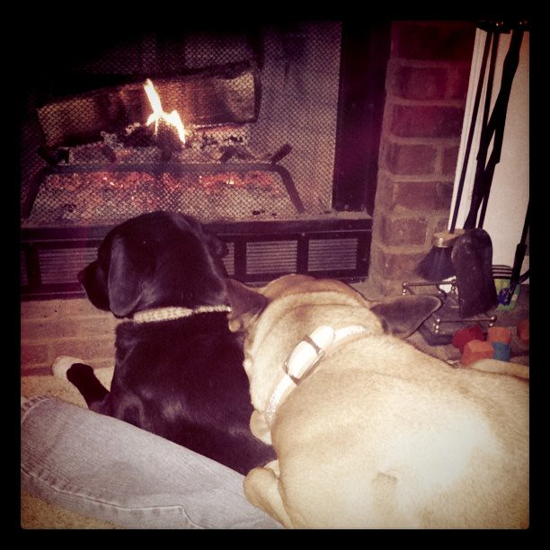 Lazy dogs by the fireplace