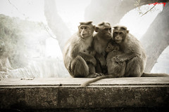 A small family (AshMec) Tags: family india love monkey bangalore hills nandi closeness maheshwari ashveen