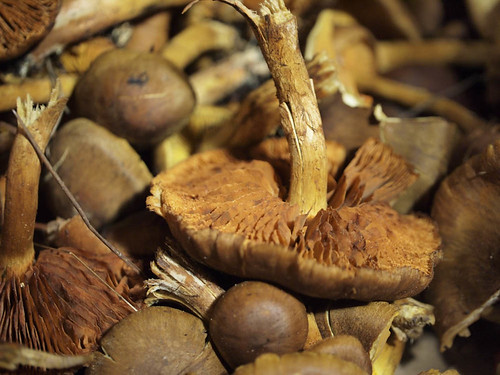 mushroom dyeing-7.jpg