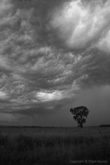 Storm on the Plains (right2roam) Tags: blackandwhite bw storm black tree weather silhouette dark intense midwest nebraska alone bad national naturereserve lone plain thunder wildliferefuge gmt greatplains boyerchute tornadoalley mygearandmepremium  right2roam elijahhassler