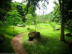 """Сад в отеле """"Palm Graden"""""""