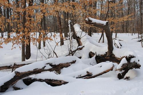 A SMR winter scene
