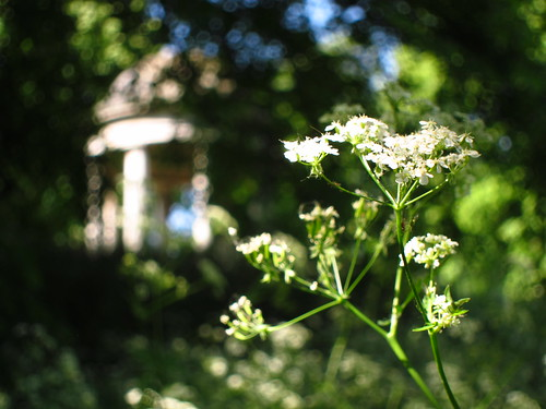 Queen Anne's Lace at the Temple of Aeolus, Kew Gardens