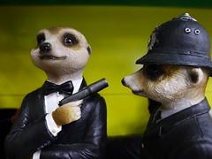 Compare the Meerkat (maf*pHew) Tags: statue meerkat gun police policeman jamesbond hostage meerkats silencer tragomills chod mafphew mafphoto meerkant