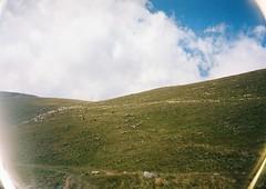 (Nikolay Kulivets) Tags: 35mm film olympusmjuii mjuii kodak georgia kazbek caucasus alpinism sheep sheeps