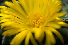 ... (akk_rus) Tags: tamronspaf90mmf28dimacro tamron 90mm f28 nikon d80 nikond80 nature  flower flowers