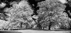 The Avenue at Gibside (K3v1n5) Tags: nikon d70s 1024 1024mm 1024mmf3545g infrared gibside countydurham princebishops 690nm nik silverefexpro