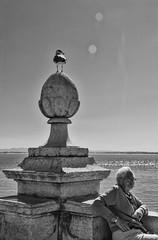 Granny at the Tejo (Leo Teles) Tags: portugal tejo seagul gaivota rio sun flare granny av abuela reflex relexo river blackandwhite outdoor monochrome