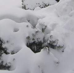 snow (crop2)