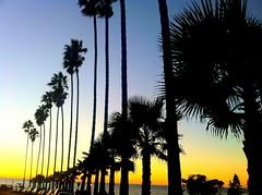 La Jolla, California   Thanksgiving Sunset 2010 (Boss Tweed) Tags: thanksgiving sunset lajolla palmtree