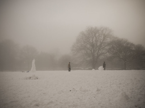 meadows in the snow and mist