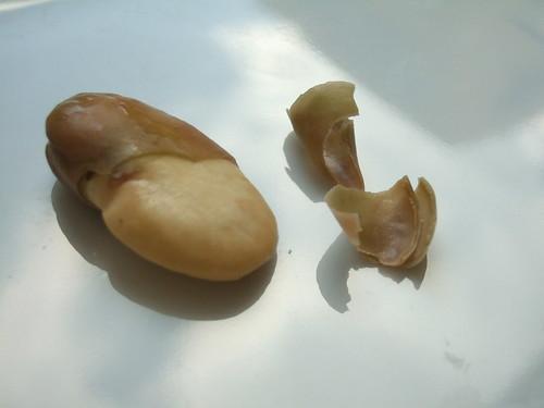 Fava half-shelled