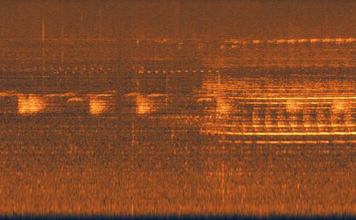 jungle spectrogram, Taman Negara, Malaysia, midnight.