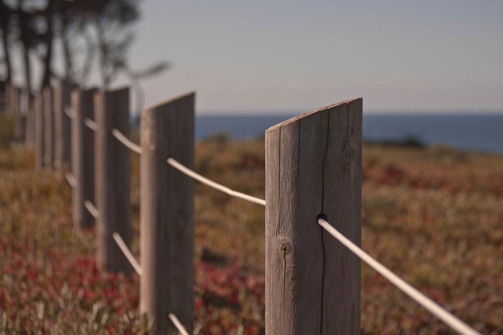 Fence, Field & Ocean