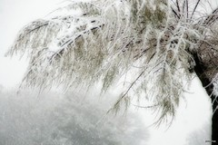 Fondo de pantalla #322 (s ) Tags: blanco navidad nieve nevada rbol invierno frio metereologa fgneve inclemenciasmetereolgicas