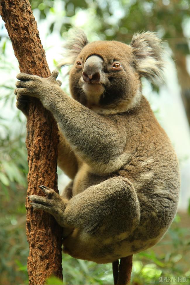 Sydney Wild Life