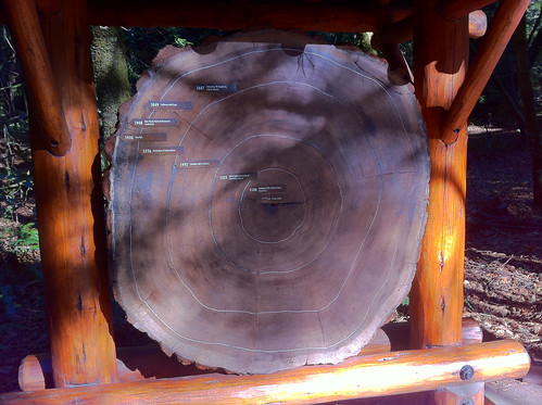 Muir Woods - Redwoods History Rings
