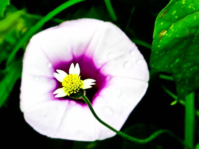 IMG_0648 Nature