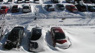 Minnesota Snow Storm 2010
