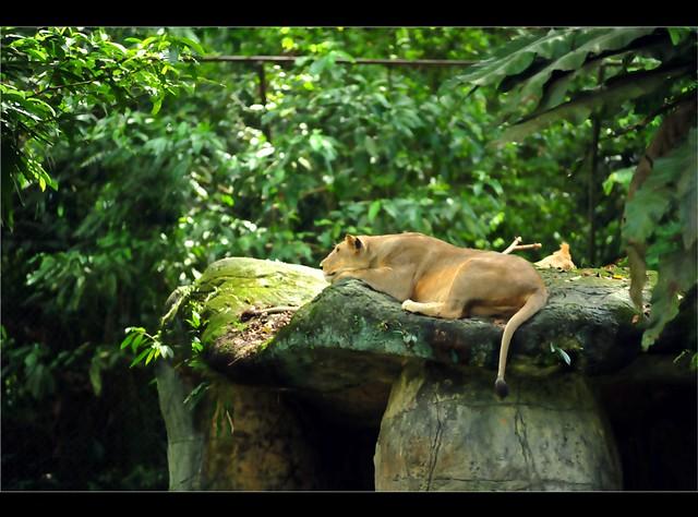Zoo Taiping 83