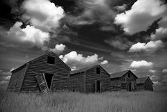 Old Sheds- B&W (grapefruit moon (Barb)) Tags: sky bw abandoned clouds rural interestingness explore alberta weathered sheds 13december2010
