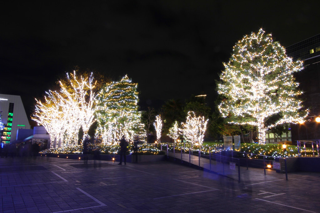 Shinjuku Xmas illumination 2010 (3)