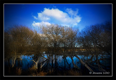 Before the Spring (JKmedia) Tags: blue trees winter sky lake reflection water clouds landscape spring pond branches roots swamp bog flooded canoneos40d fabcap jkmedia