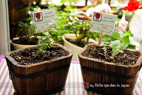 gardening-in-japan
