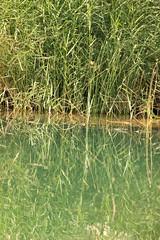 grass (shahmurai) Tags: pakistan reflection green nature grass landscape fort fortification sindh rannikot canon550d canonrebelt2i