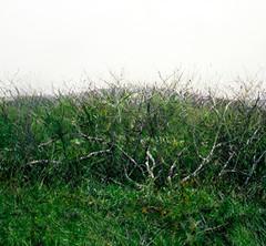 Eric Zener : Inside the Artist's studio and interview regarding his new Nature series of work - Warholian (WarholianPics) Tags: art nature studio eric artist paintings arts artists oil series publishing fund warholian zener