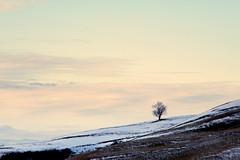 Solitudine nella neve (Skiwalker79) Tags: winter italy snow italia neve terra albero inverno bianco freddo collina ghiaccio romagna cesena casalbono