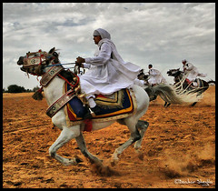 Flying Without Wings ! (Bashar Shglila) Tags: horses white moving knight tradition sands libya tripoli outfits libyan           saariysqualitypictures tripleniceshot  mygearandmepremium mygearandmebronze mygearandmesilver mygearandmegold mygearandmeplatinum ringexcellence