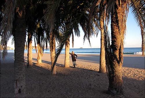 Palmen am Stadtstrand Kopie