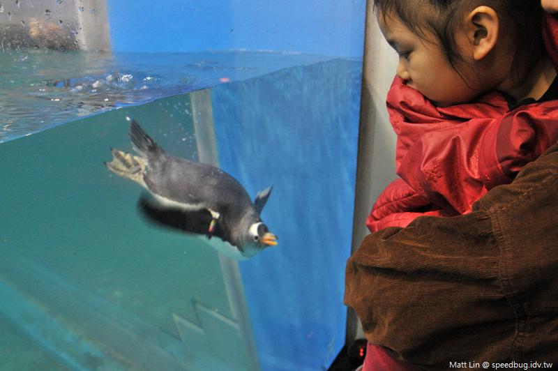 海生館企鵝餵食 (5).jpg