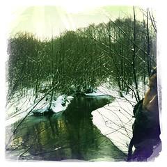 Winterwald im Briesetal (brandenburgblog) Tags: schnee winter ausflug brandenburg kurztrip spaziergang wanderung mhlenbeck briesetal wensickendorf mhlenbeckerland