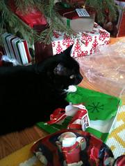 Christmas cat 2010