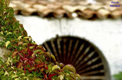 Tricolore (w l'Italia)