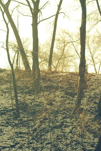 woods_0038
