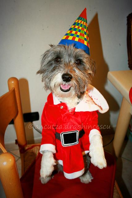 immagini divertenti cane con cappello e vestito da babbo natale
